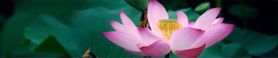 Lotus Flower of Enlightenment