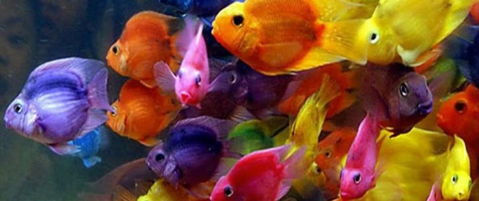 Multi-colored Fish