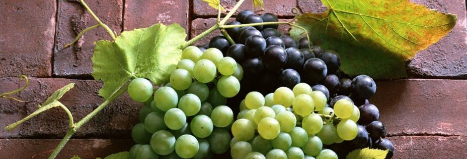 Grapes from the Vineyards of the Spirit