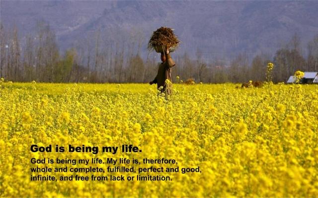 Mustard Field at Srinagar, Kashmir_1680x1050 pixels