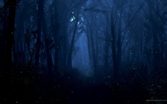 Woods at Night