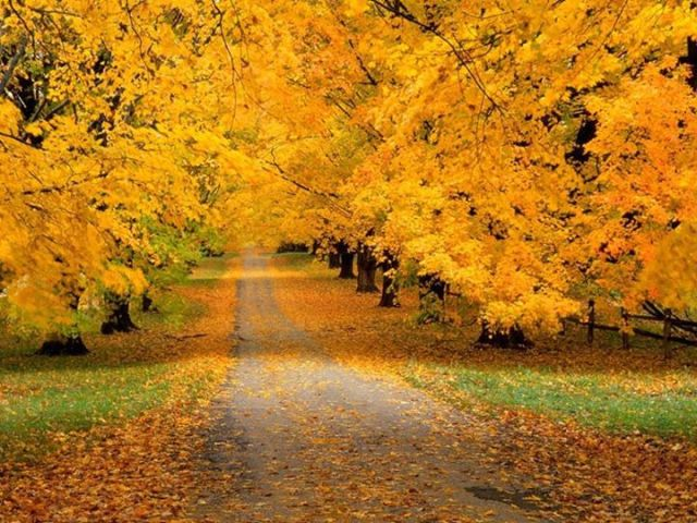 Picture of Autumn in The Mystical Path