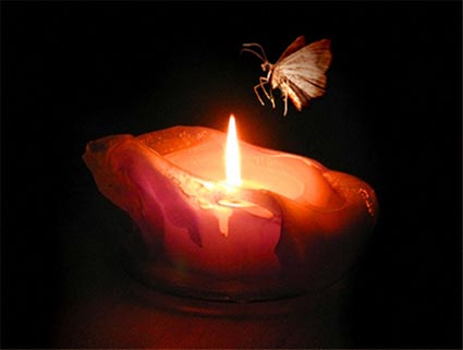 Photograph of a moth flying over a burning candle.