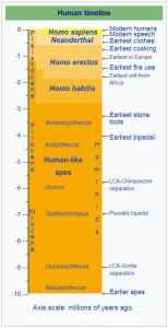Graphic representation for the Timeline of Human and Later Primate Evolution