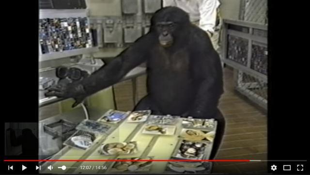 Facsimile image for Kanzi NHK documentary.